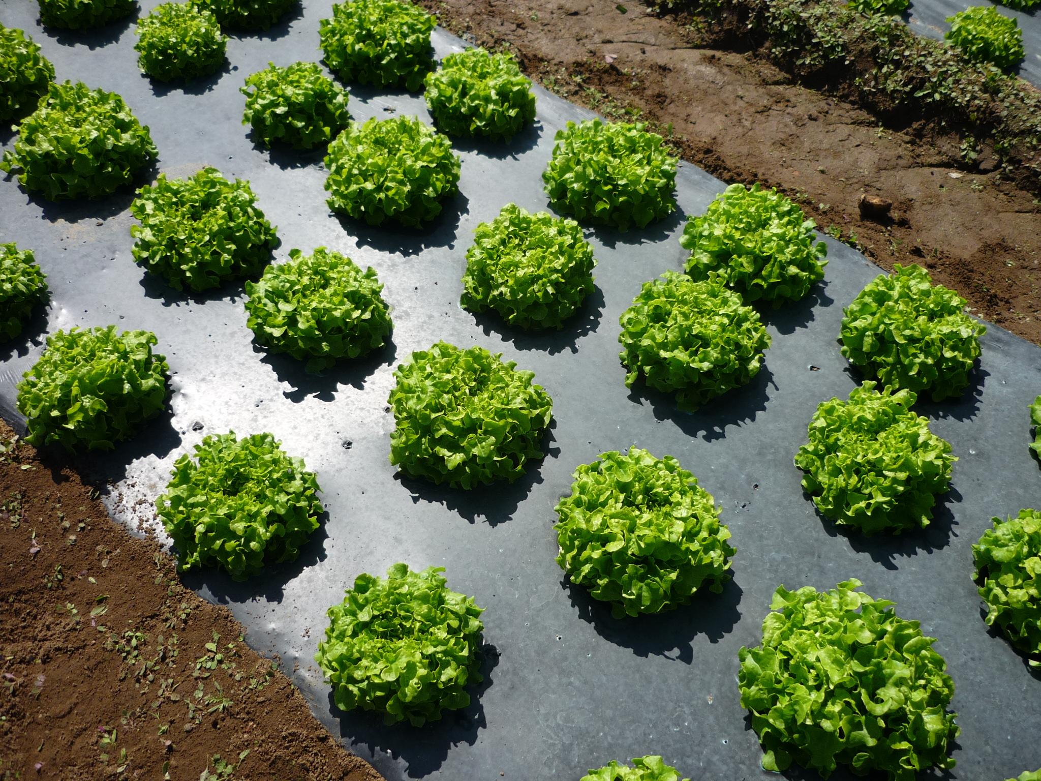 Depuis 2005 experts des polymères biodégradables